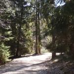 My walking/running grounds.