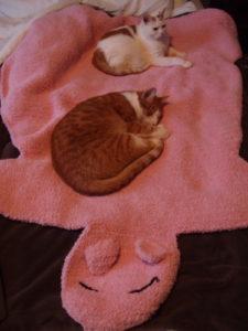 Kitties and Piggy