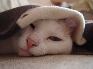 Sally Under a Blanket