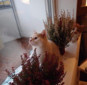 Kitties and Heather
