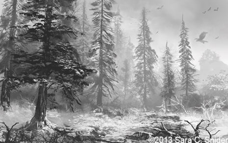 Sketches Pictures of a Forest Pictures of Forests With